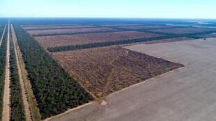 Au Paraguay, les champs de soja grignotent la forêt.