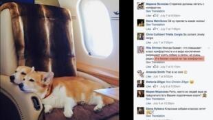 Скриншот фотографии питомцев вице-премьера, опубликованный в соцсетях «собачьим менеджером» семьи