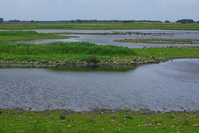 Los humedales son cruciales para la vida de los seres humanos y del planeta.