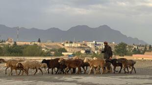7月20日宰牲節期間,喀布爾一男子趕着羊群前往一處販售市場