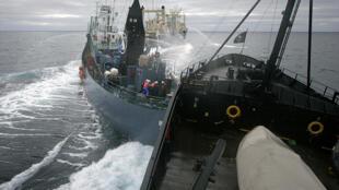 Embarcação do Sea Shepherd persegue baleeiro japonês, perto do santuário de baleias no Pólo Sul.