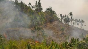 Partout dans toute l'île, le tavy (culture sur brûlis) a repris de plus belle depuis mi-septembre. Ici, entre Ifanadiana et Ranomafana, on brûle la forêt pour planter à la hâte le riz pluvial et espérer avoir de quoi se nourrir ces prochains mois.