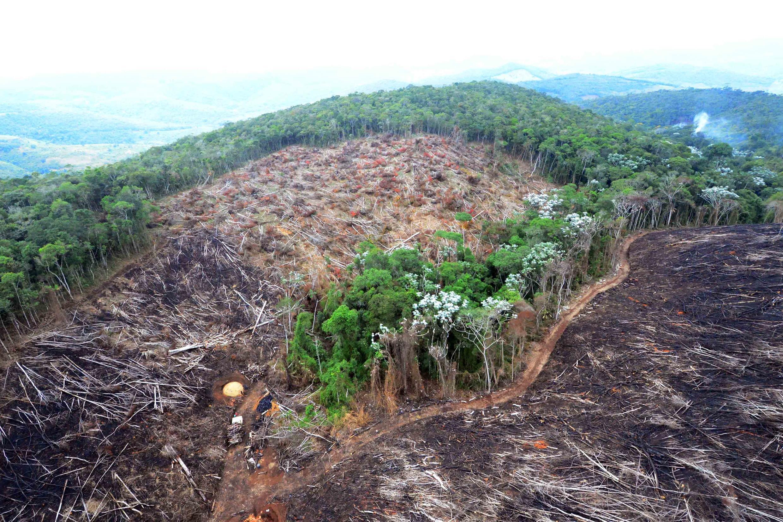 Brasil precisa combater desmatamento para atingir meta climática