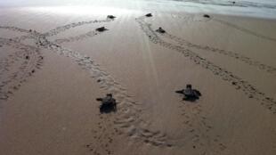 Tartarugas em Cabo Verde