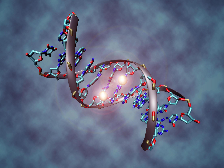 Chaque individu a un génome unique qui pourra être décodé rapidement grâce à l'invention de Jonathan Rothberg.