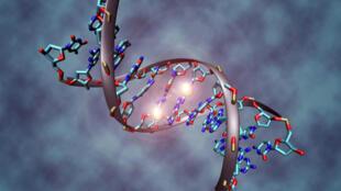 Estudo mostra que 80% do DNA pode ter funções relacionadas ao desenvolvimento celular