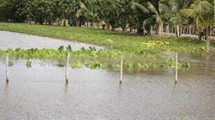 Una plantación inundada cerca del pueblo de Hoyo Colorado, a 170 km de La Habana, el 29 de octubre de 2012, luego del paso del huracán Sandy.