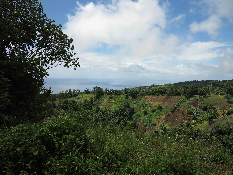 Autour de Gourbeyre et Saint-Claude (sud de la Guadeloupe), cette région agricole est la plus polluée au chlordécone.