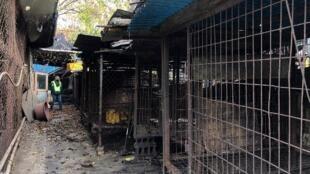 Fazenda precária de produção de carne de cães em Seongnam, ao sul de Seul. 22/11/18