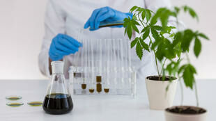 recherche-plante