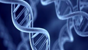 La technique d'archivage de données dans l'ADN serait quasiment éternelle.