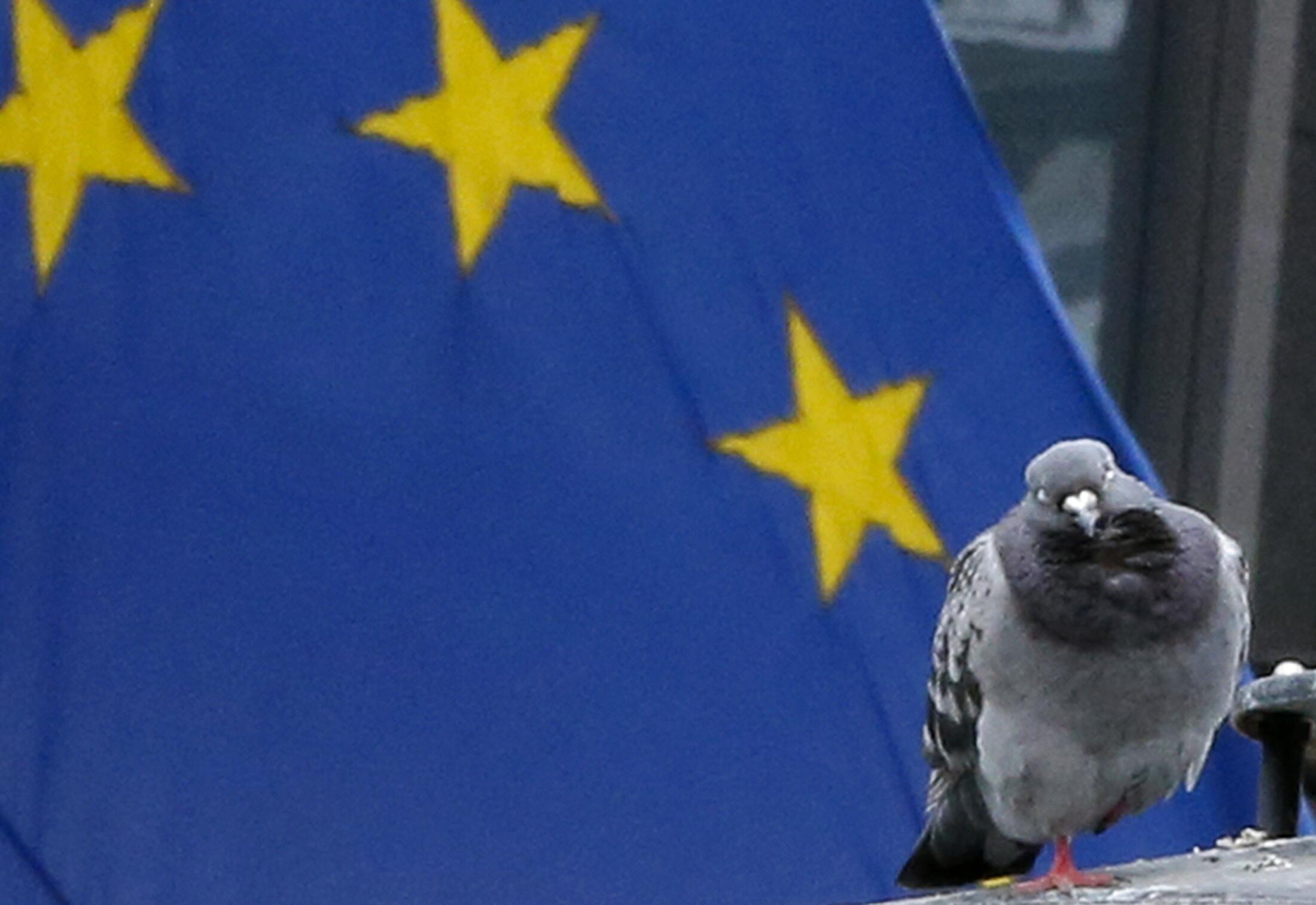 Foto mostra um pombo diante da bandeira da União Europeia, em Bruxelas.