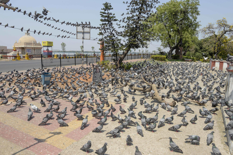 Las palomas ocupan una calle desierta de la ciudad india de Hyderabad el 25 de marzo de 2020