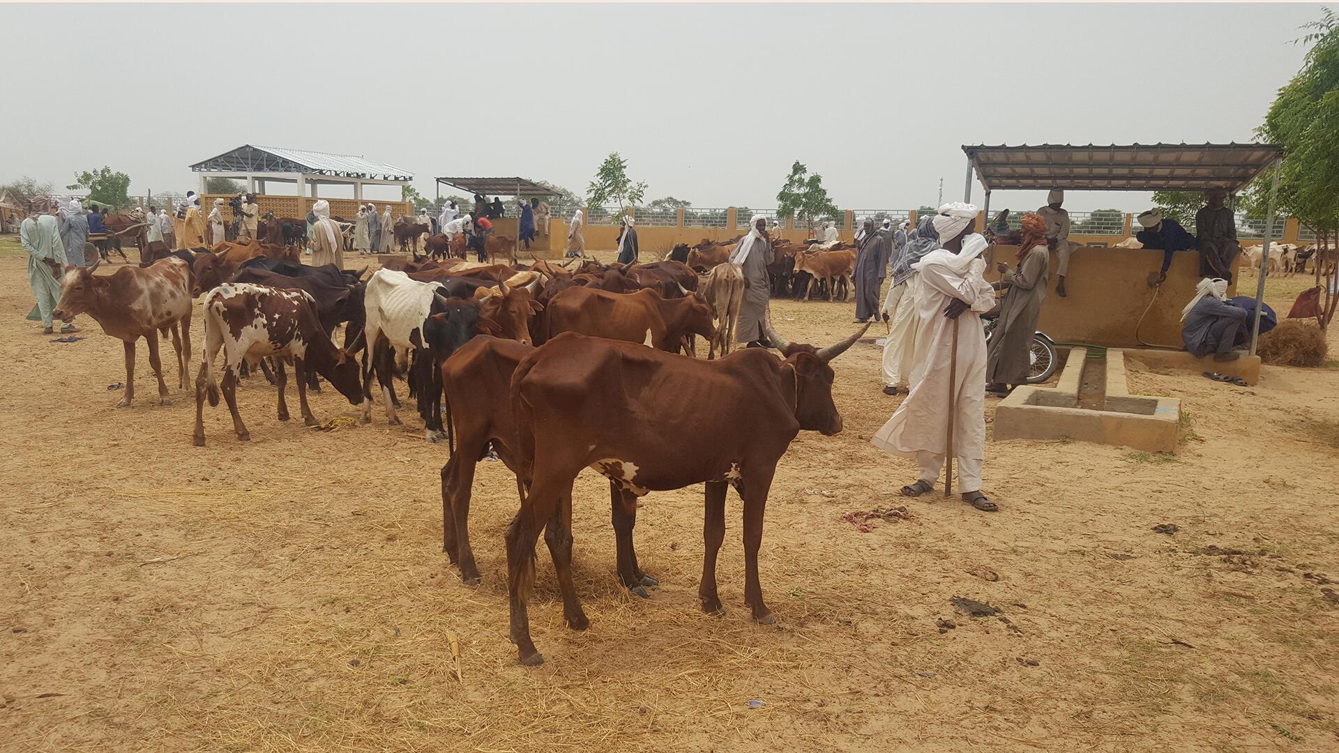 Tchad - marché de bétail de Karmé - Le coq chante 1er août 2021
