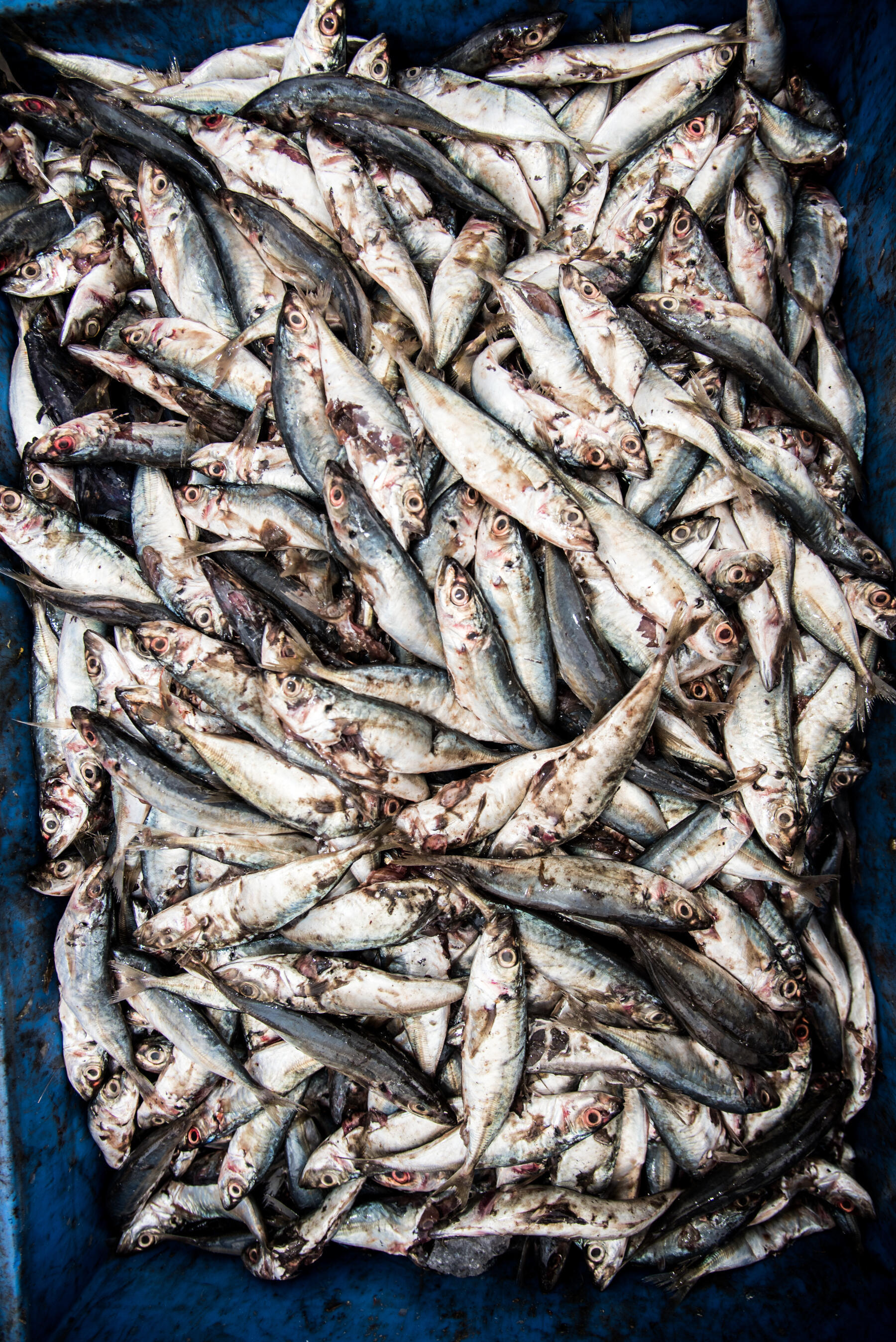 Products labelled as sustainable in European supermarkets have been linked to destructive fishing practices.