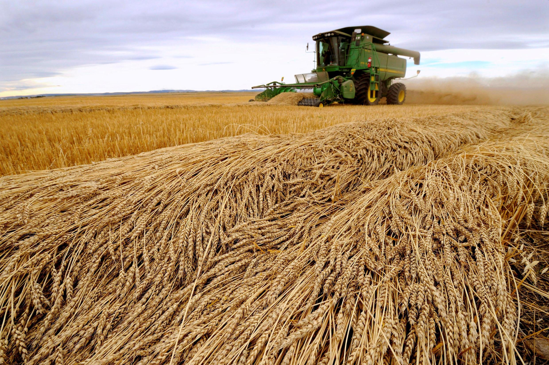 Le département américain à l'agriculture, l'USDA, premier fournisseur de bilans mondiaux, ne publie de statistique ce qui plonge les marchés agricoles dans l'incertitude.