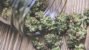 Le cannabis à usage médical est déjà autorisé dans une trentaine de pays.