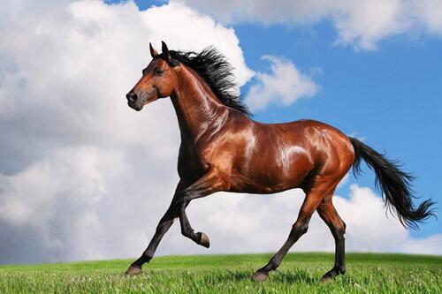Theo phong tục, ngựa được coi là một biểu tượng của năm Giáp Ngọ 2014.