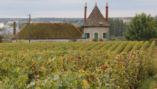 法国葡萄酒盛产地勃艮第一景