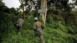 Des gardes du parc national des Virunga.