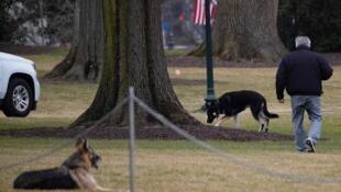 網傳拜登在白宮的兩隻寵犬照片