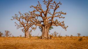 Vue d'un paysage au Sénégal.