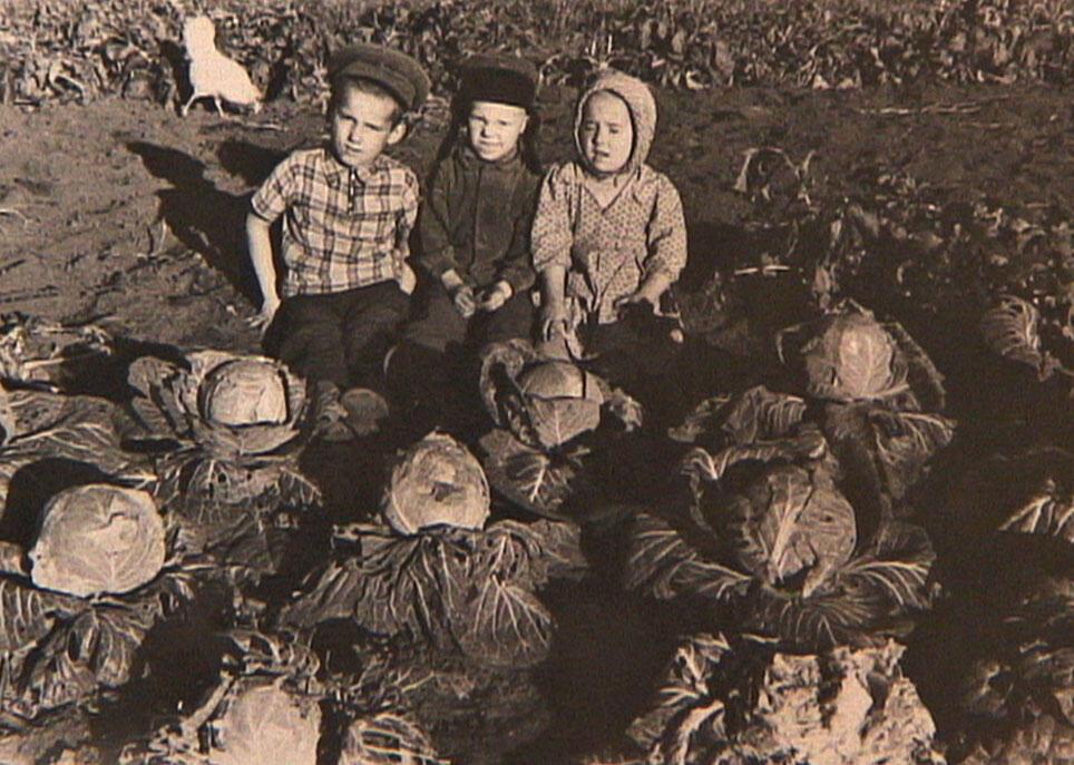 Les enfants de Josas Milauskas dans un champ de choux en Sibérie.