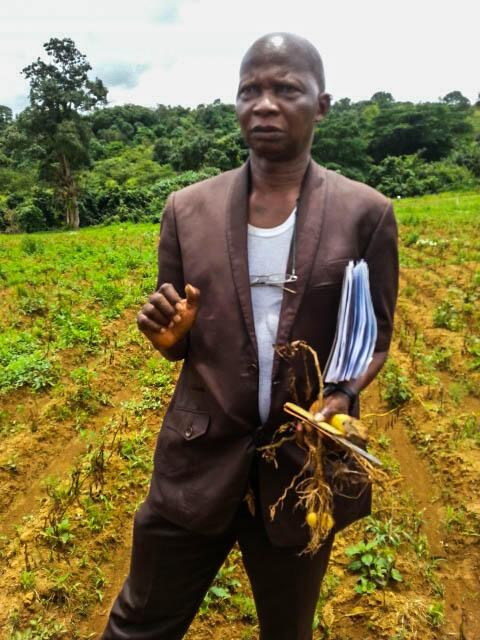 Le docteur Maxim Tamba Kamano, chef de division production de l'Institut de recherche agronomique de Guinée, constate sur le terrain les dégâts provoqués par le mildiou.