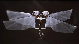 DelFly Nimble est un poids plume de 29 grammes et mesure 33 centimètres d'envergure