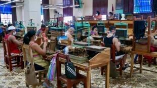 Port du masque obligatoire et distanciation sociale respectée pour les plus de 300 ouvriers de la fabrique de H. Upmann, à Cuba.