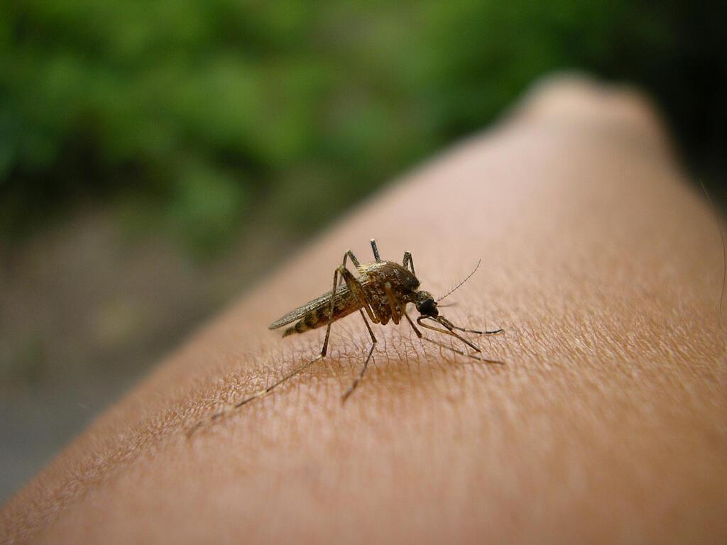 A malária ou paludismo é uma doença transmitida pela picada do mosquito Anopheles.