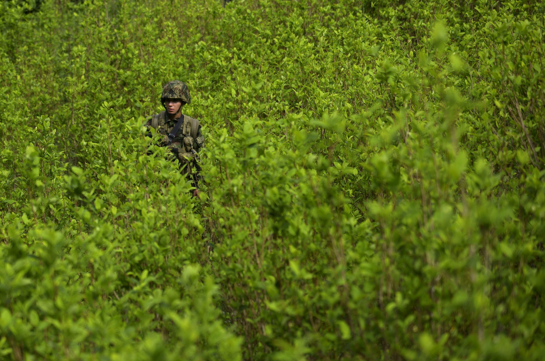Un soldat de l'armée colombienne, au milieu d'un champ de Coca, au nord-est de Medellin, le 3 septembre 2014.