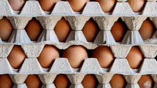 Kho trứng tại một trang trại ở Lunteren, Hà Lan.