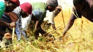 Las explotaciones familiares constituyen la columna vertebral de la agricultura.