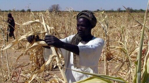 Dans la région sahélienne du Kanem à l'ouest du Tchad, les populations se préparent une nouvelle fois à une période de soudure qui s'annonce difficile.