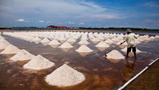 Une rizière en Thaïlande.