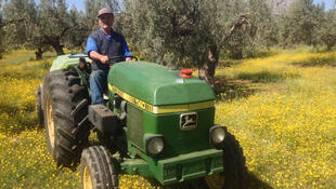 Dimitris Didaskalou, sur son tracteur, devant ses oliviers à Corinthe. La région produit 15 % de la production nationale.