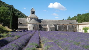 Nhà dòng Notre-Dame de Senanque và cánh đồng hoa oải hương, tại tỉnh Vaucluse, vùng Provence-Alpes-Côte d'Azur.