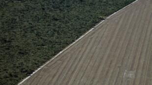 bresil-cerrado-deforestation-agriculture