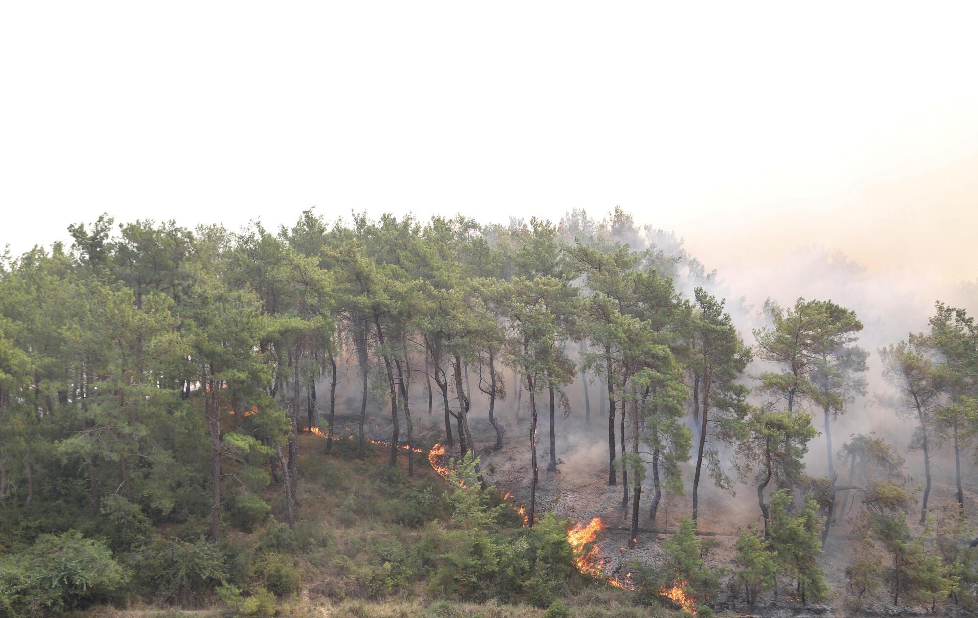 Manavgat - feu - fire - turquie - incendie forêt