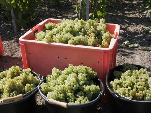 A past Champagne harvest.