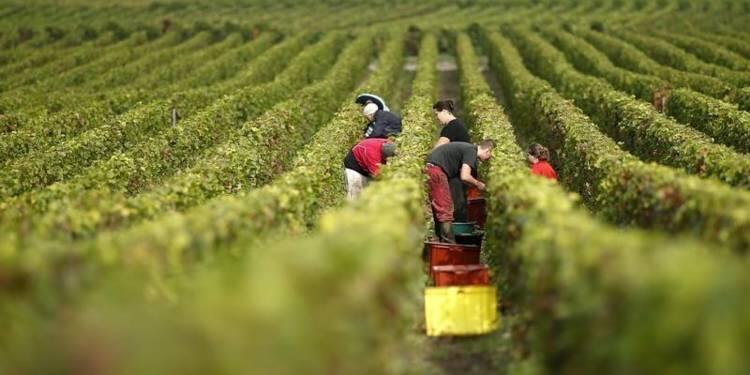 Mùa hái nho ở Champagne : 17 vùng phía đông nước Pháp trồng nho để sản xuất rượu Champagne
