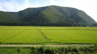 Rice fields in Fukushima province