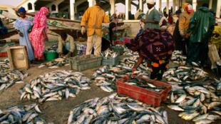 Marché au poissons en Mauritanie.