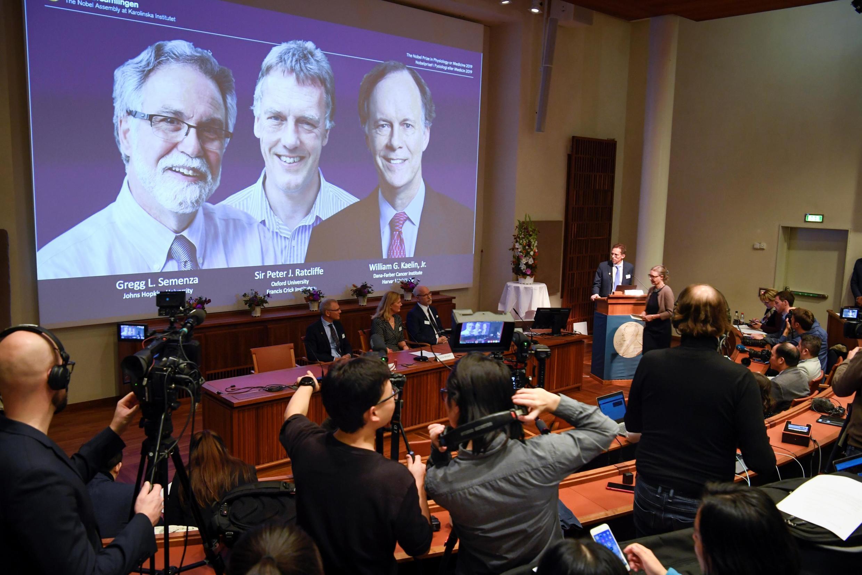Giải Nobel Y học được trao cho ba nhà khoa học Mỹ, Anh, Stockholm, Thụy Điển, 07/10/2019.