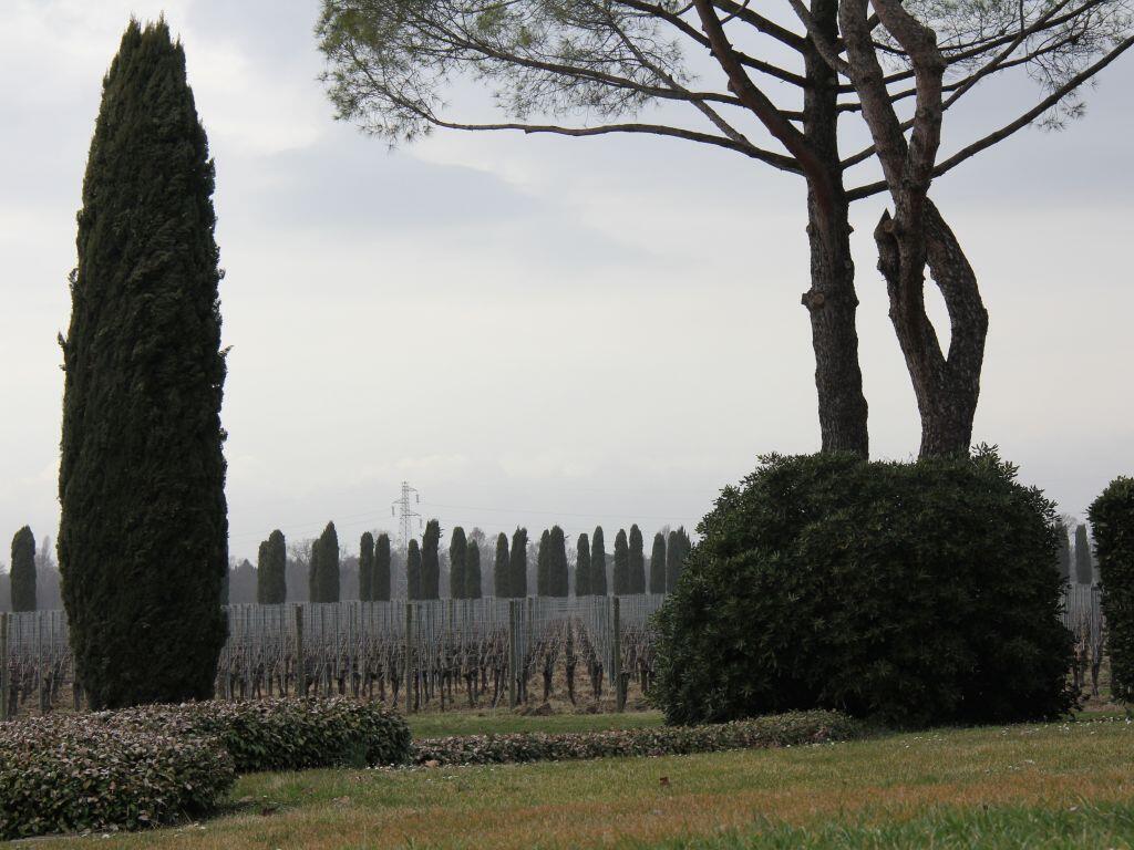 Le domaine Ca' Bocani à Friuli Venetia Giulia.