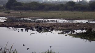Río Santiago en El Salto, estado de Jalisco, México. Unas 400 fábricas han vertido desechos industriales en él durante cuatro décadas, convirtiéndolo en un depósito de 1.090 sustancias nocivas, según el Instituto Mexicano del Agua.