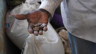 Des tourteaux d'arachides. L'aflatoxine produite par le champignon est particulièrement cancérigène.