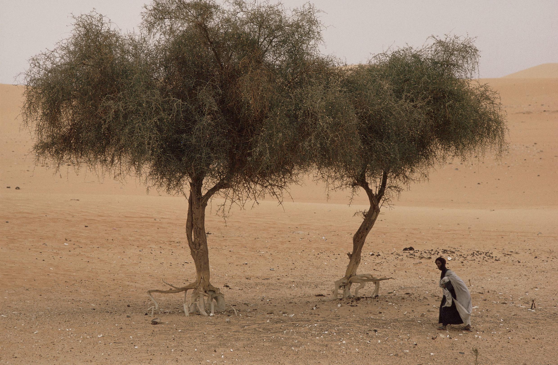 Episode de sécheresse en Mauritanie. (Image d'illustration)