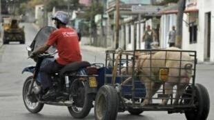 Một người dân chạy xe ba bánh chở một con heo trên đường phố thủ đô La Habana, ngày 1/4/11. Buôn bán nhỏ đang được Nhà nước Cuba khuyến khích.